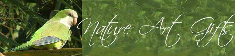 parrot header for Nature Art Gifts